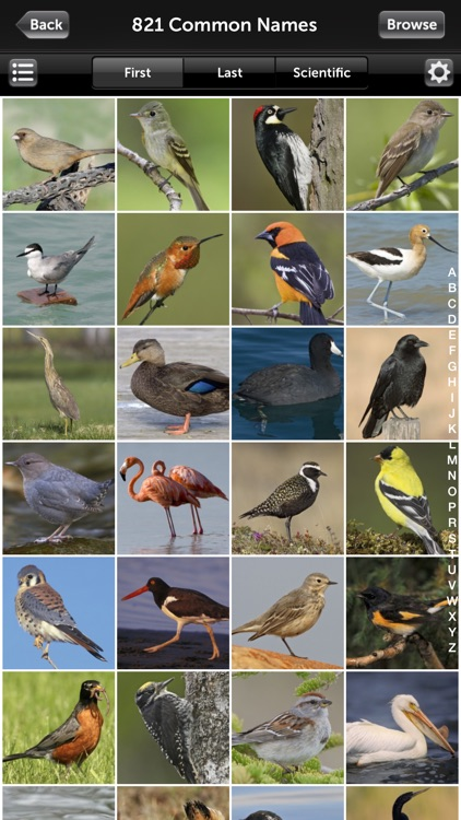Audubon Bird Guide: North America