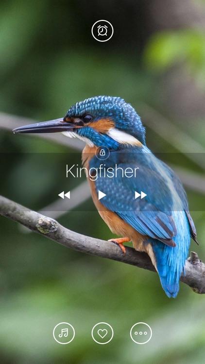 Bird Sounds, Listen & Relax screenshot-3