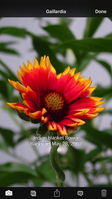 Plant Album screenshot three