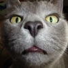 猫は音:猫愛好家のための本当のと楽しい音を - iPadアプリ