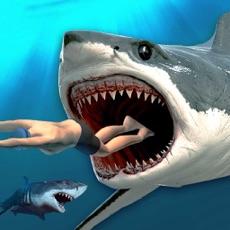 Activities of Killer Shark Hunting: Hungry Fish Evo Adventure