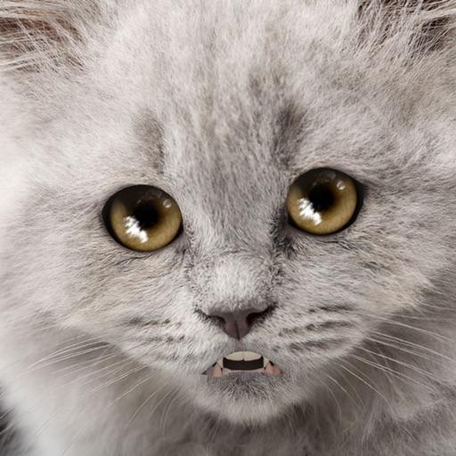 Talking Sad Cat