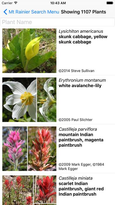 Mt Rainier Wildflowers screenshot two