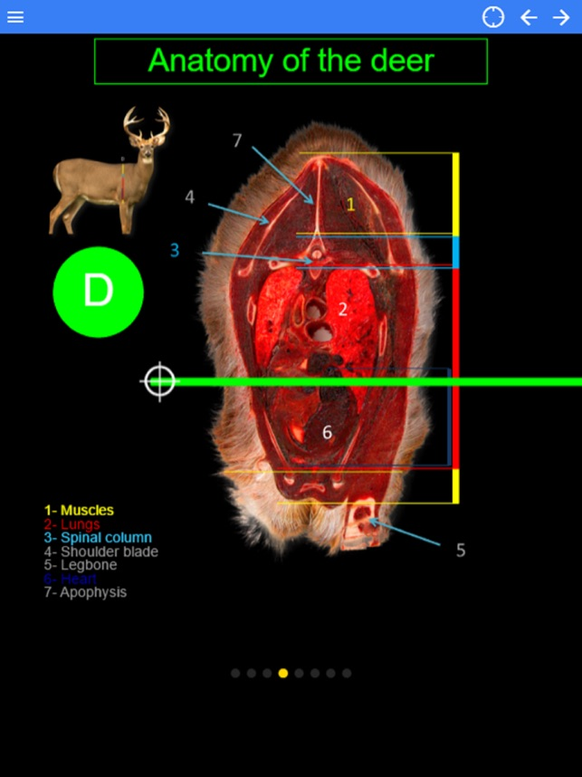 Red Deer Anatomy Image collections - human body anatomy