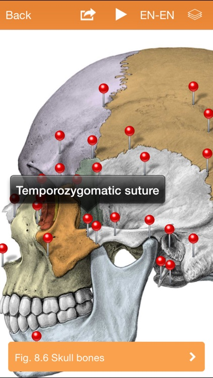 Sobotta Anatomy Atlas screenshot-2