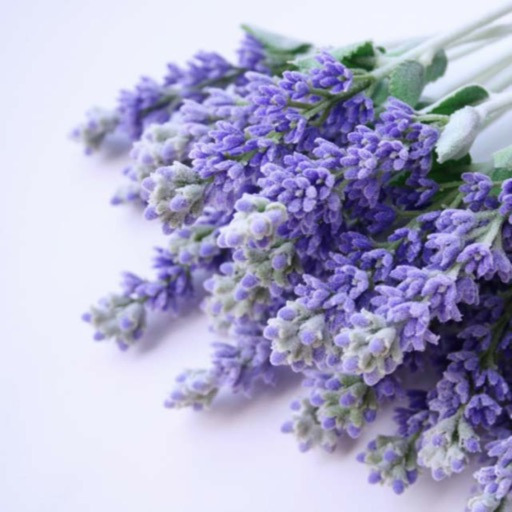Medicinal Plants Collection