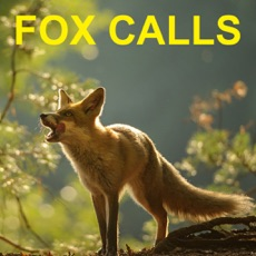 Activities of Predator Calls for Hunting Fox