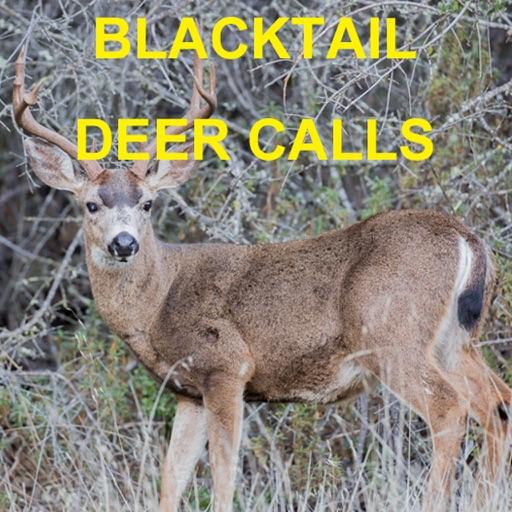 Blacktail Deer Calls Sounds for Deer Hunting
