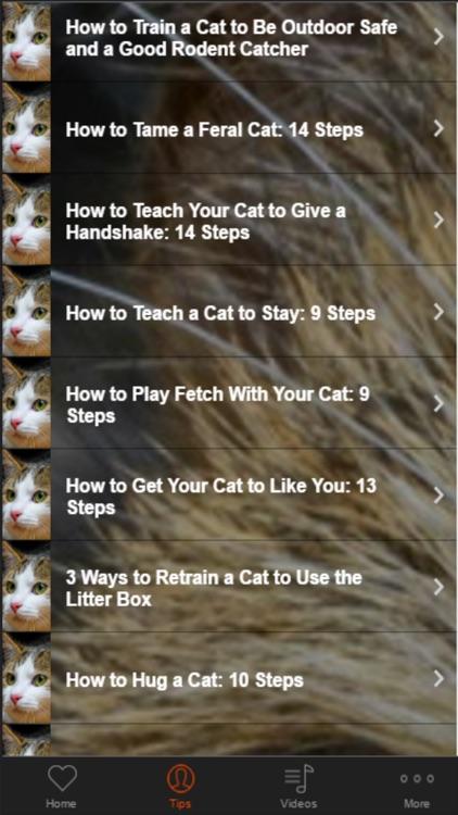 Cat Training - Basic Tips For Beginners screenshot-3