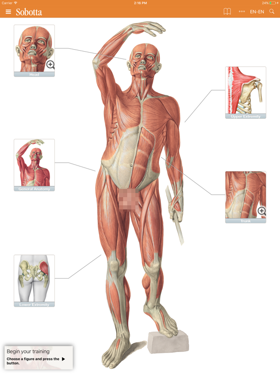 Sobotta Anatomy Atlas screenshot