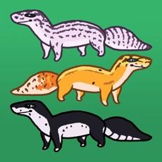 Activities of Gecko Garden
