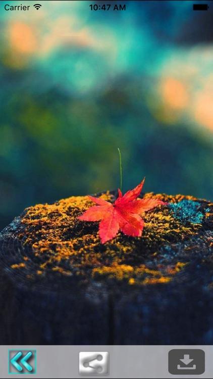 First Day Fall - Autumn HD Wallpapers screenshot-4