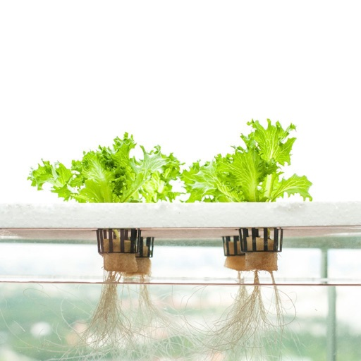 Hydroponics for Beginners-Growing Guide and Tips