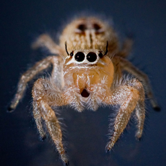 Talking Spider