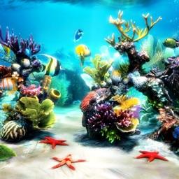 Amazing Aquarium Sticker