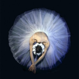 Ballet Wallpapers Hd Quotes With Art Pictures By Xi Zhang