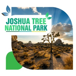Joshua Tree National Park Travel Guide