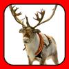More Maker Booth Store - ReindeerCam - Watch Santa's Reindeer & More!  artwork