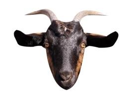 Goat Sticker for iMessage