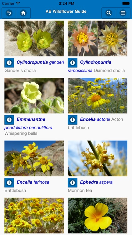 Anza-Borrego Wildflower Guide screenshot-0