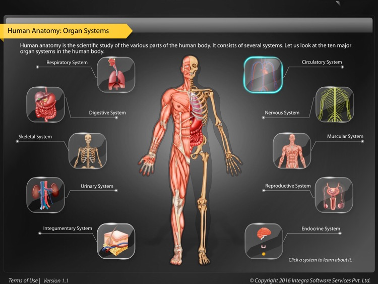 Human Anatomy Explorer - Circulatory System