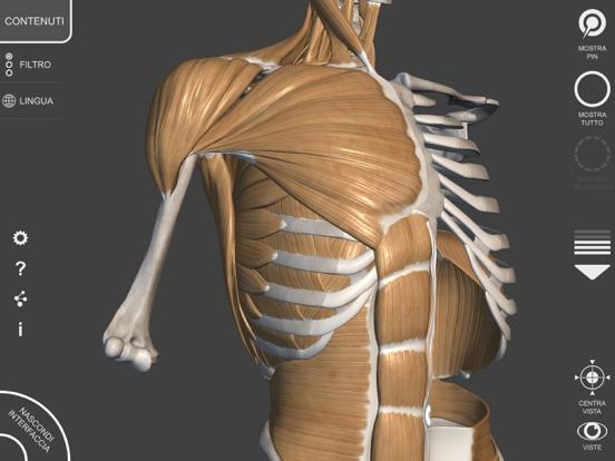 3d Anatomy For The Artist V 12 App Price Drops