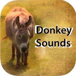 Donkey Sounds - Funny Sounds