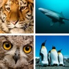 Animal Quiz Close Up : Guess the Word Trivia Games