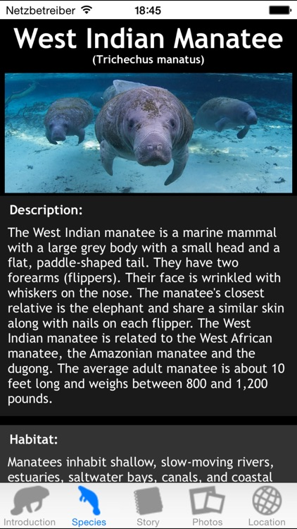 Manatees screenshot-1