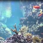 Reef Aquarium 2D/3D free icon