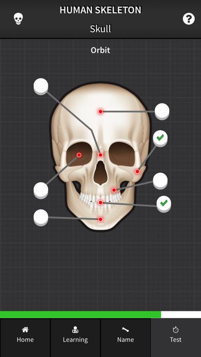 Human Skeleton: Bones for beginners screenshot four