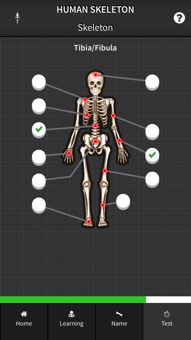 Human Skeleton: Bones for beginners screenshot two