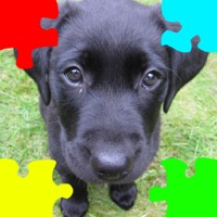 Codes for Puppies (Baby Dogs) Jigsaw Puzzles Hack