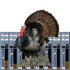 Turkey Call Mixer