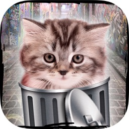 Hello cute cats – Kittens in the world & cat game