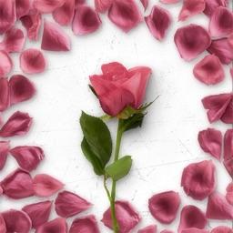 Flower Greetings Pink Roses