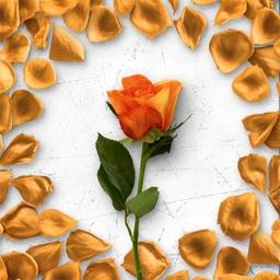 Flower Greetings Orange Roses