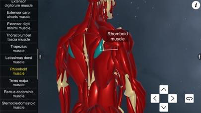 Learn Muscular System screenshot 5