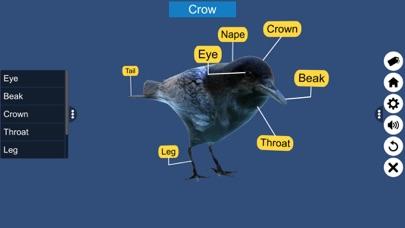 Diversity in Living: Aves screenshot 7