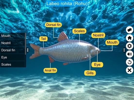 Diversity in Living: Pisces screenshot 11