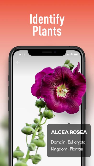 AITranslator&PlantIdentifier Screenshot