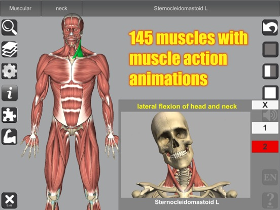 3D Anatomy Screenshots