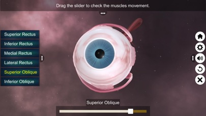 The Eye (Anatomy & Physiology) screenshot 9