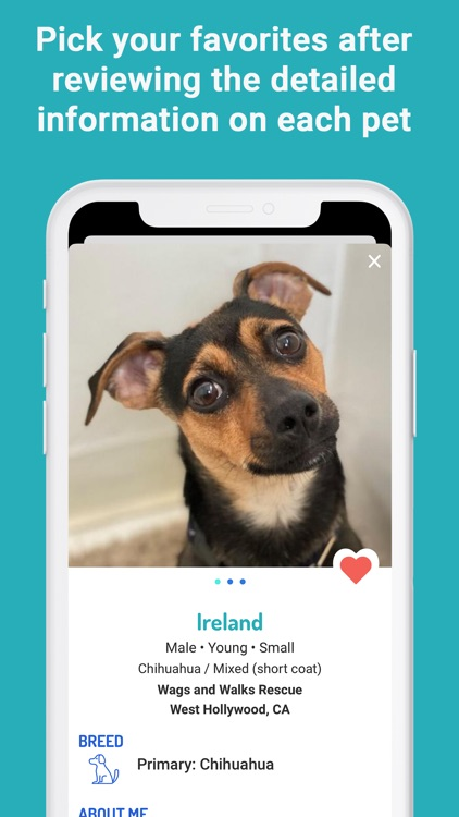 WeRescue – Adopt a Pet screenshot-5