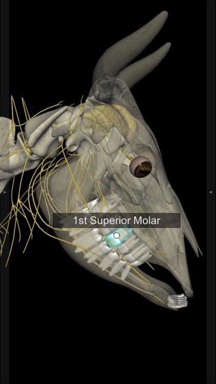 3D Bovine Anatomy screenshot-5