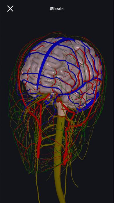 3D人体解剖学 teamLabBody2020のおすすめ画像5