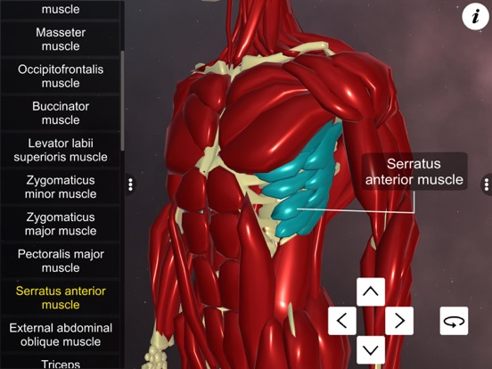 Learn Muscular System screenshot 11