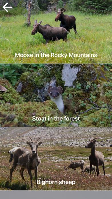 自然と野生生物紹介画像1