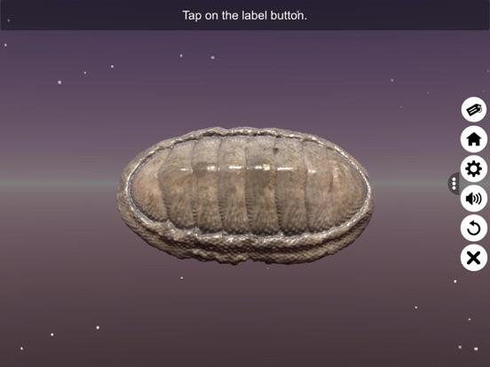 Diversity in Living: Mollusca screenshot 11