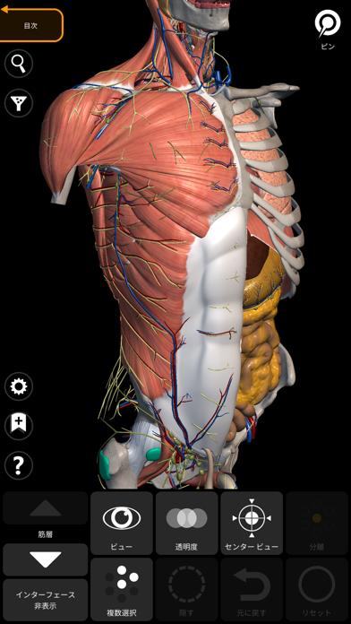 解剖学 - 3Dアトラス ScreenShot1